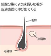ヘアサイクル1