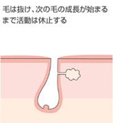 ヘアサイクル3